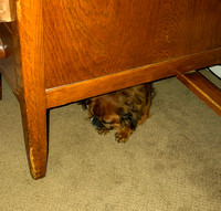 Mae napping under the desk_2020