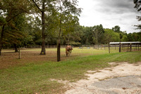 6 Running Fawn Ct, For Sale, Horse Facilities